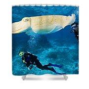 Divers Swim Near A Cuttlefish Shower Curtain
