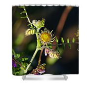 Divine Natural Creations Shower Curtain
