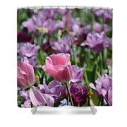Divine Tulip Display Shower Curtain