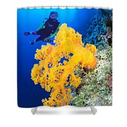 Diving, Australia Shower Curtain by Dave Fleetham - Printscapes