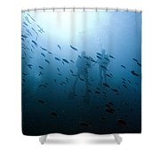 Diving With Fishes Shower Curtain