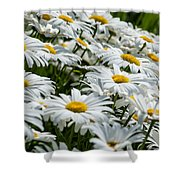 Dizzy With Daisies Shower Curtain