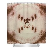 Dna X-ray Shower Curtain