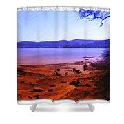 Do-00134 Gosford Waterfront Shower Curtain