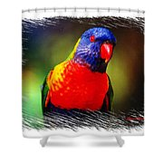 Do-00153 Colourful Lorikeet Shower Curtain