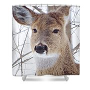 Do You Hear What I Hear? Shower Curtain by Lori Frisch