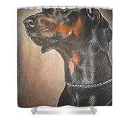 Doberman Shower Curtain