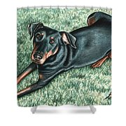 Dobermann Shower Curtain
