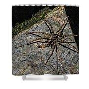 Dock Spider Shower Curtain