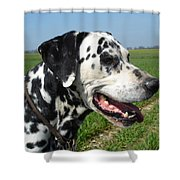 Dodgy The Dalmation Shower Curtain