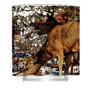 Doe And Buck Shower Curtain