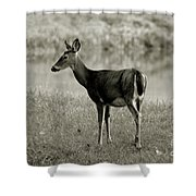 Doe By The Waters Edge Shower Curtain