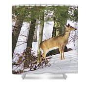 Doe Emerges Shower Curtain