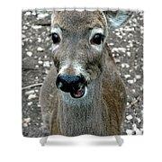 Doe Eyed Deer Talk Shower Curtain