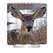 Doe Shower Curtain
