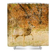 Doe High Stepping On Bald Mountain Shower Curtain