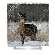 Doe In The Cove Shower Curtain