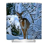 Doe In The Snow In Spokane 2 Shower Curtain