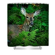 Doe In The Woods Shower Curtain