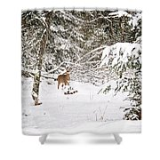 Doe In Winter Snow  Shower Curtain