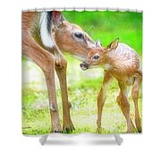 Doe Nuzzles Her Fawn Shower Curtain