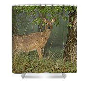 Doe On A Foggy Morning In Wyoming Shower Curtain
