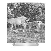 Doe With Twins Pencil Rendering Shower Curtain