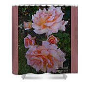 Does Roses Has Thorns Or Does Thorns Has Roses Shower Curtain