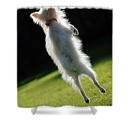 Dog - Jumping Shower Curtain