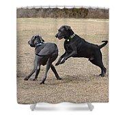 Dog 382 Shower Curtain