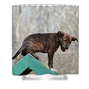 Dog 388 Shower Curtain