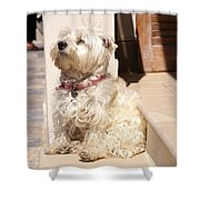 Dog Begging Shower Curtain