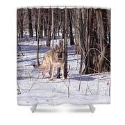 Dog Breed German Shepherd Shower Curtain