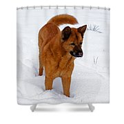 Dog Days Of Winter Shower Curtain