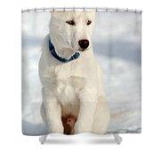 Dog Eared Shower Curtain