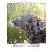 In The Autumn The Dog Looks Back At The Summer   Shower Curtain