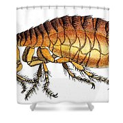 Dog Flea, Illustration Shower Curtain