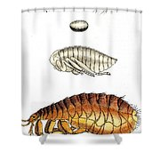 Dog Flea, Lifecycle, Illustration Shower Curtain