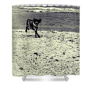 Dog Frolicking On A Beach Shower Curtain