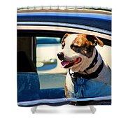 Dog In Car Shower Curtain