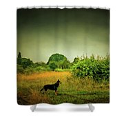 Dog In Chesire England Landscape Shower Curtain