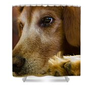 Dog In Thought  Shower Curtain