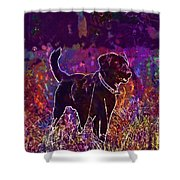 Dog Labrador Animal Canidae Canine  Shower Curtain