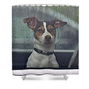 Dog Looking Out Car Window Shower Curtain