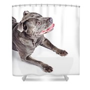 Dog Looking Up To Pet Copyspace Shower Curtain