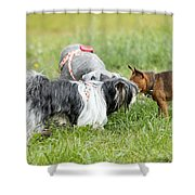 Dog Meeting  Shower Curtain