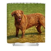 Dog Named Max Shower Curtain