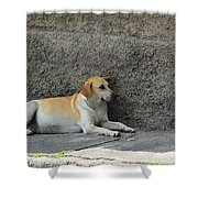 Dog Next To A Wall Shower Curtain