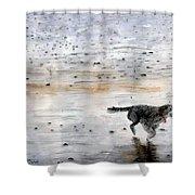 Dog On Beach Shower Curtain