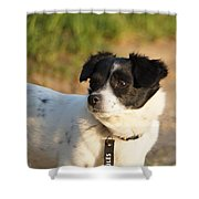 Dog On Sun Shower Curtain